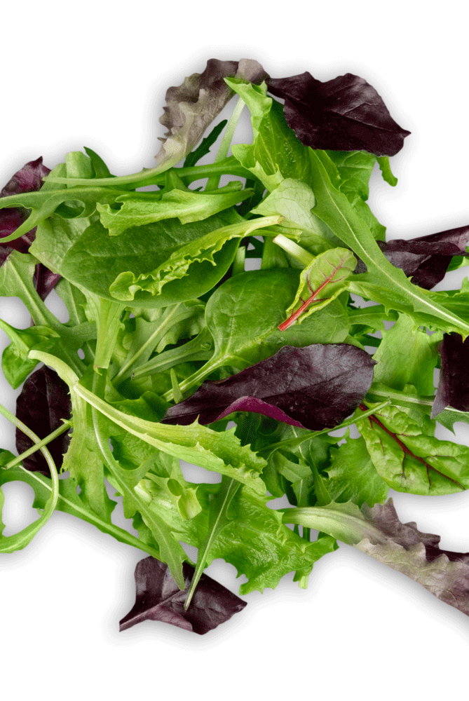 BABY LETTUCE Image
